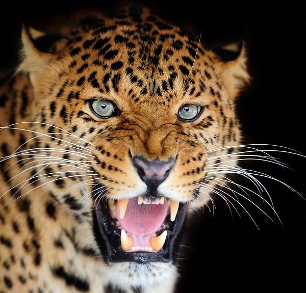 深度思维 | 为什么要小心躲在互联网暗处的那条猎豹