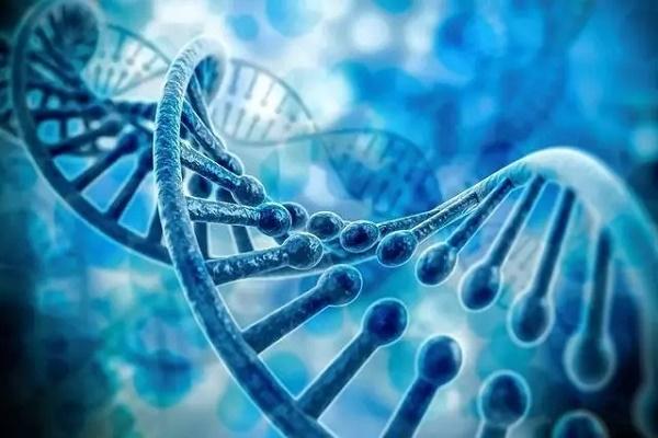 基因组编写CAD即将面市,仍有无限可能
