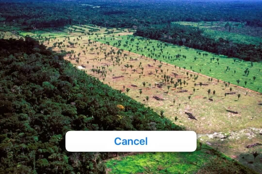 如何利用旧手机捕捉雨林深处的非法伐木者