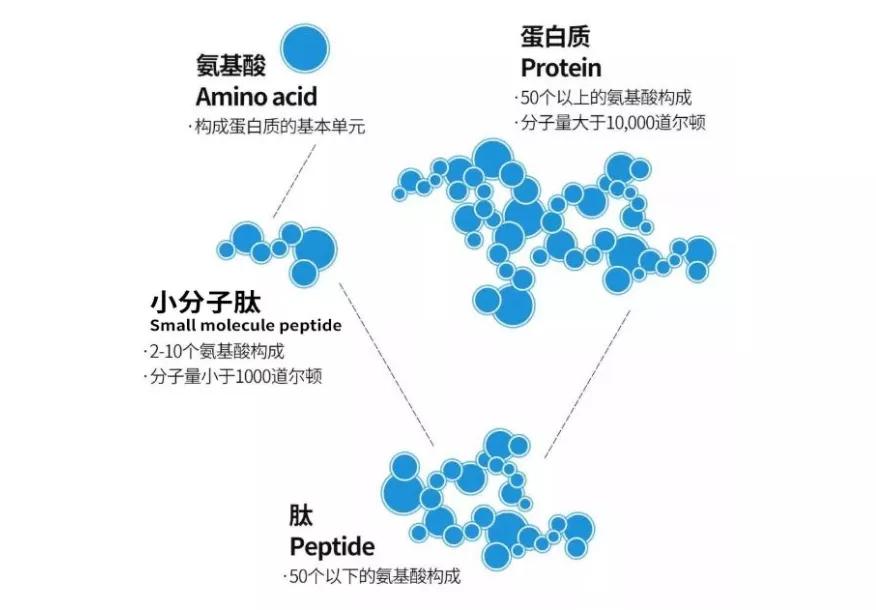 芯片公司Cerebras和生物公司Peptilogics强强联合,AI加速肽疗法的开发周期